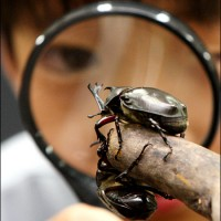 bug-hunter-koreatimes