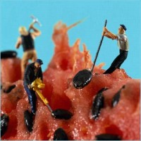 Men Working on Watermelon