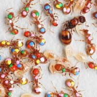 Marked Ants